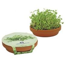 Kresse-Schale, Kresse - grün