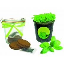 Kräuter-Glas, Basilikum - grün