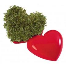 Ein gesundes Herz, Kresse - rot