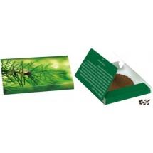Fichten-Päckchen - grün