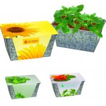 Wachstums-Kästchen Kräuter, Basilikum - grün