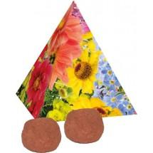Pyramide Spitzenwachstum, Blumenmischung - rot