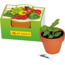 Naschgemüse-Töpfchen, Blattsalat-Mix - grün