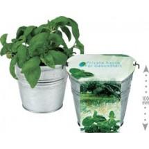 Maxi Kräuter-Eimer, Basilikum - grün