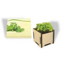 Pflanzsteckbox Green, Basilikum - grün
