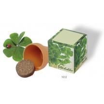 Würfel Glück, Glückskleezwiebelchen - grün