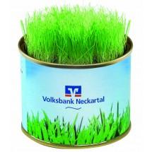 Grüne-Oase-Dose, Zimmerrasen  - blau