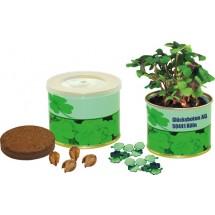 Glück aus der Dose, Glückskleezwiebeln  - grün