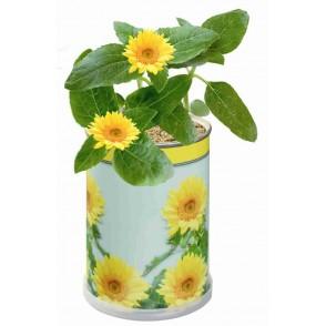 Blumendose Sonne